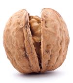 Photo of a walnut shell